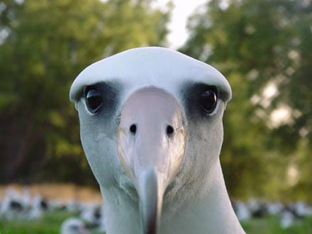 Don't Kill an Albatross