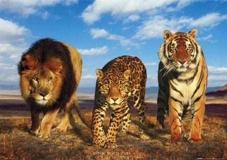 Image of: Latin America Lions And Leopards And Other Big Cats Like Tigers Are Some Of The Most Challenging And Dangerous Animals To Hunt Both Lions And Leopards Have Exceptional Huntercoursecom The Worlds Most Dangerous Game To Hunt Hunter Safety Blog
